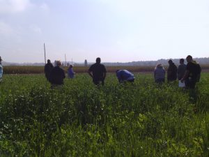 Attendees looking at a knee high cover crop mix that was planted in August!